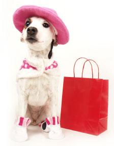 stylish-dog